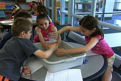 Hands-on science experiment shows students how a swamp works